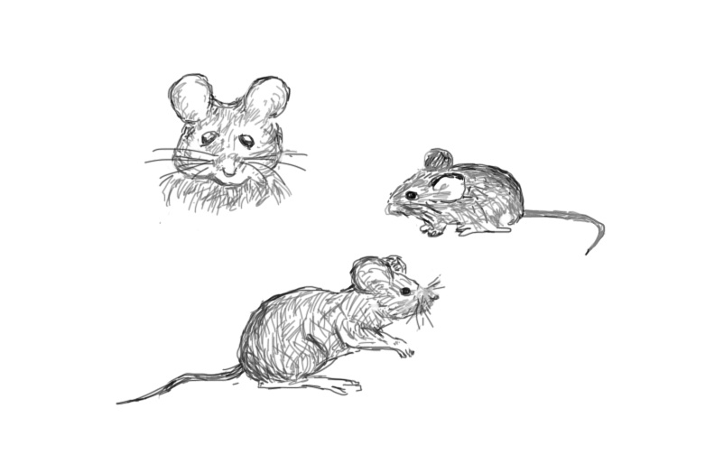 mouseies 3
